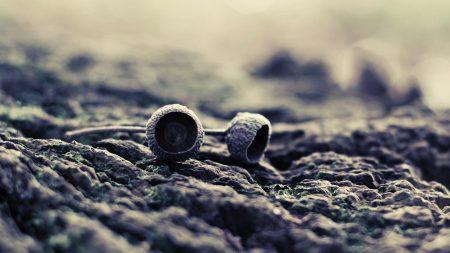 acorn, dark, surface