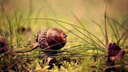 acorn, earth, grass