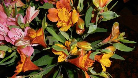 alstroemeria, flowers, bouquets