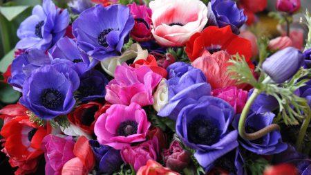 anemones, flowers, bouquet