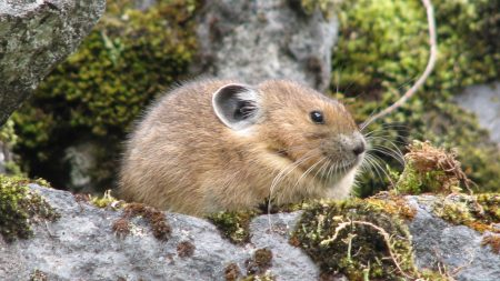 animal, moss, rocks