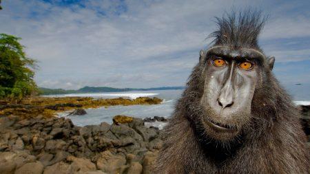 animal, primate, beach