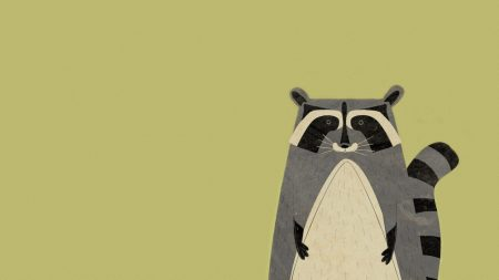 animal, raccoon, minimalism