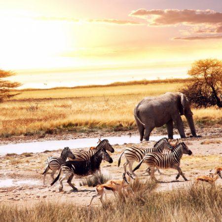 animals, savannah, africa