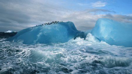 antarctica, penguins, ice