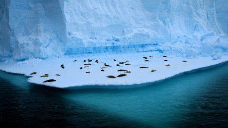 antarctica, seals, glaciers