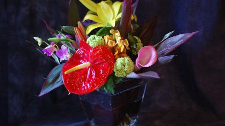 anthurium, calla, lily