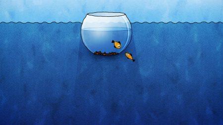 aquarium, fish, water