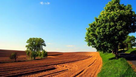 arable land, field, trees