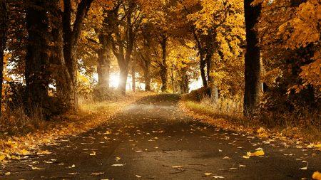 asphalt, leaves, autumn