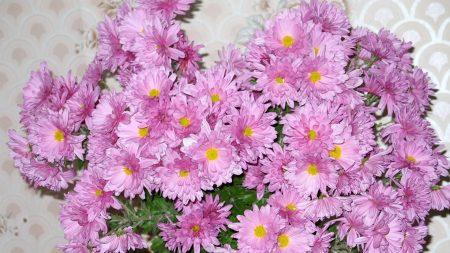 aster, flowers, bouquet