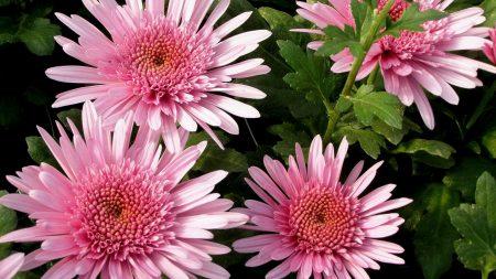 asters, flowers, herbs