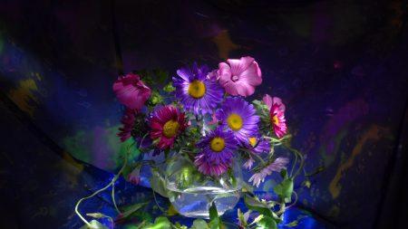 asters, flowers, vase