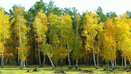 autumn, arykbalyk, forest