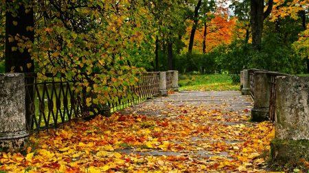 autumn, bridge, trees