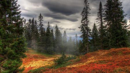 autumn, fog, trees