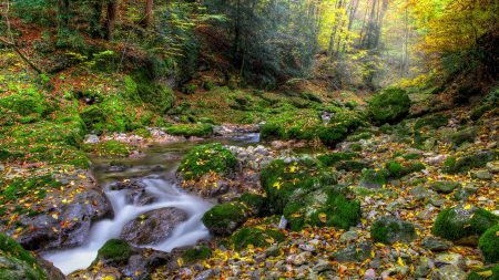 autumn, forest, river