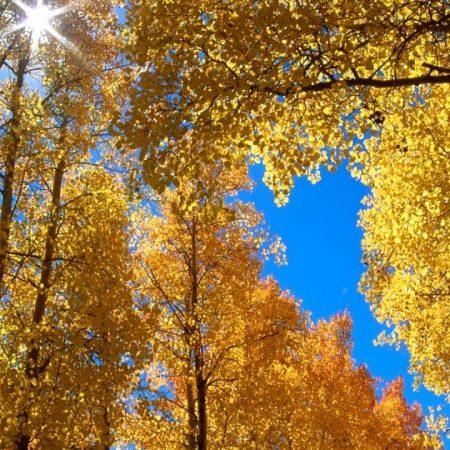autumn, leaves, birches