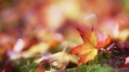 autumn, leaves, bokeh