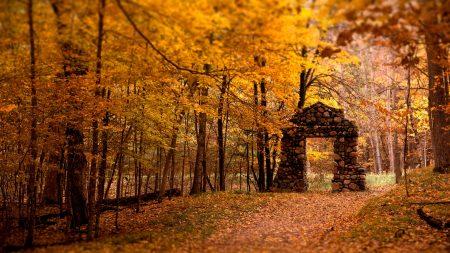 autumn, leaves, tree