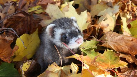 autumn, muzzle, leaves