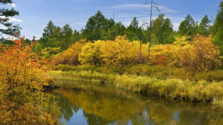 autumn, october, wood
