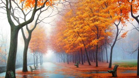 autumn, park, avenue