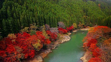 autumn, river, forest