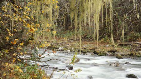 autumn, river, trees