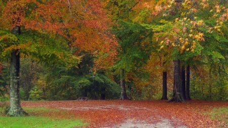autumn, road, trees