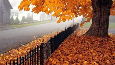 autumn, tree, leaves