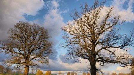 autumn, trees, clouds