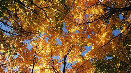 autumn, trees, crones