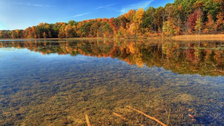 autumn, water, transparent