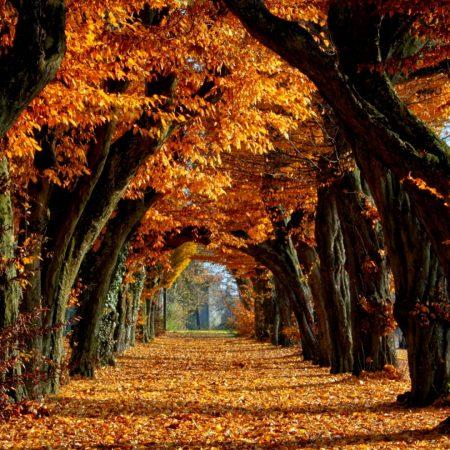 avenue, autumn, trees