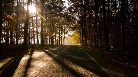 avenue, park, trees