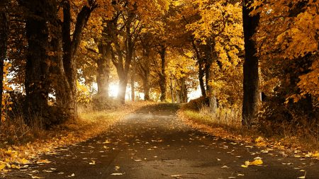 avenue, road, sun