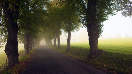 avenue, trees, fog