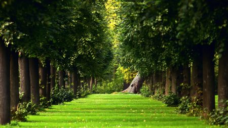 avenue, trees, path