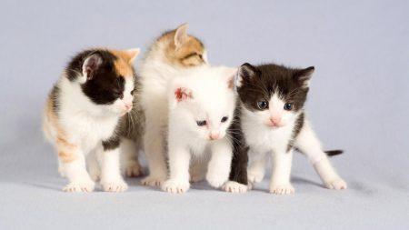 babies, kittens, small