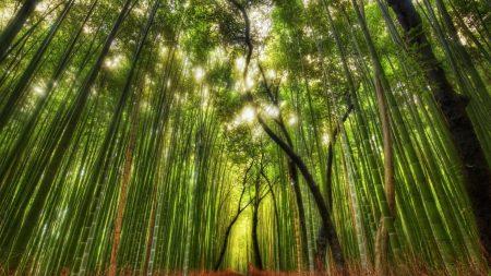 bamboo, wood, tops
