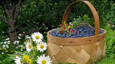 basket, berry, bilberry