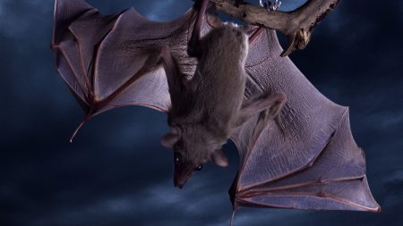bat, hanging, animal