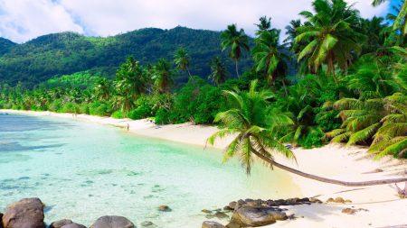 beach, palm trees, resort
