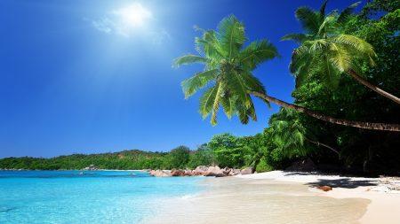 beach, sand, palm trees