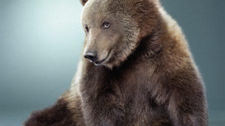 bear, black, cute