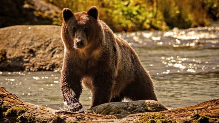 bear, color, water