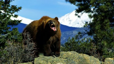 bear, cry, hills