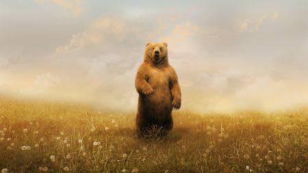 bear, field, flowers