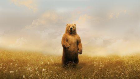 bear, field, grass